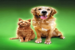 cat-and-dog-green
