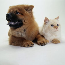 dog-and-cat-large